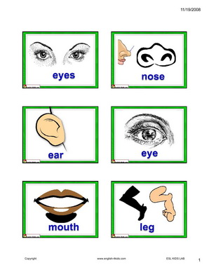 Body parts activity for kids.